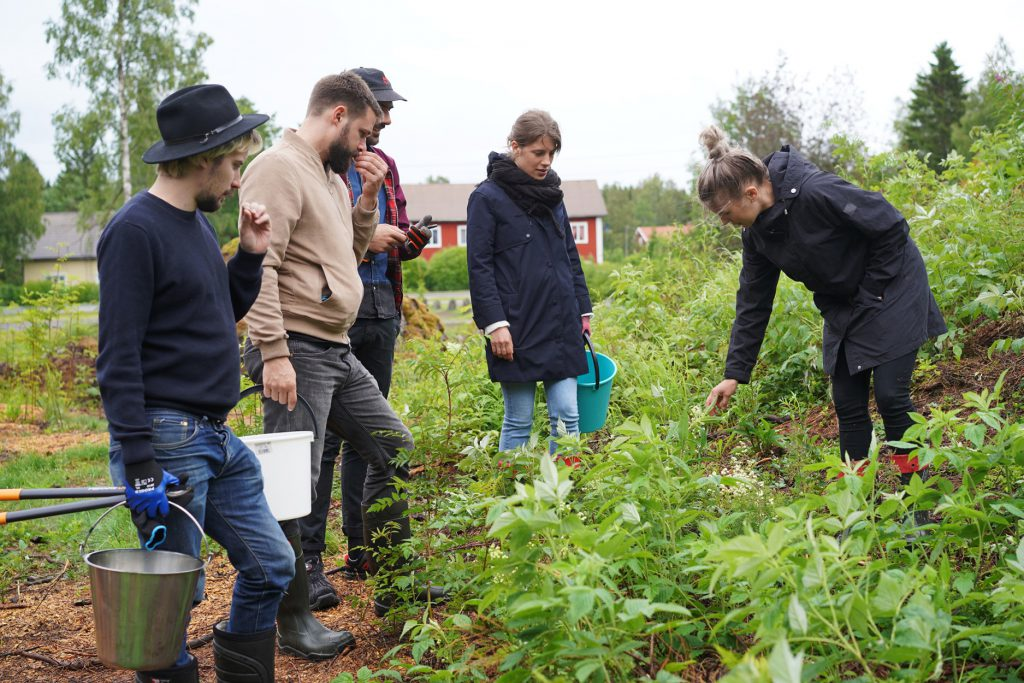 Foraging at Kyrö Rye Experience 2019